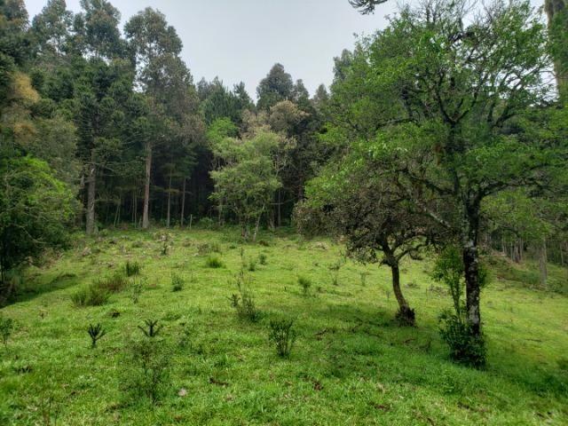 Lindo Sítio com Vista Para o Vale Rio Rufino/Urupema - Foto 11