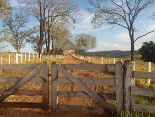 Fazenda 648 alqueires Pecuária - Echaporã- SP - F200503