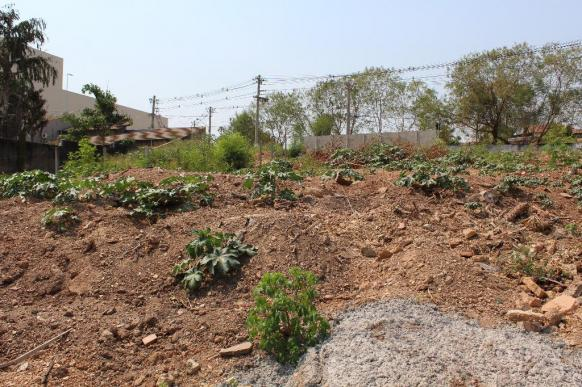 Terreno para alugar em Santa rosa, Cuiabá cod:CID1308 - Foto 3