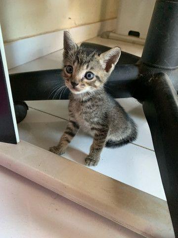 Filhotes gatos  - Foto 2