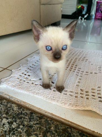 Filhotes gatos  - Foto 3