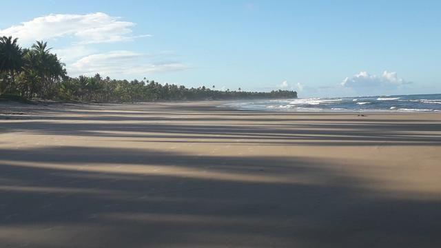 Lotes Taipu de Fora - Península de Maraú - Bahia - Foto 16