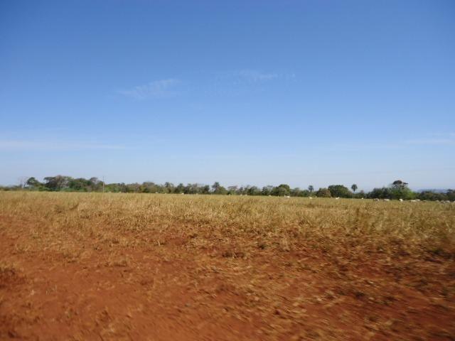 2600 hectares, 2000 hectares entregue Enleirada Região Nova Maringá?MT