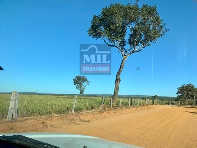 Fazenda 22 Alqueires (106 hectares) Nova Xavantina-MT - Foto 7