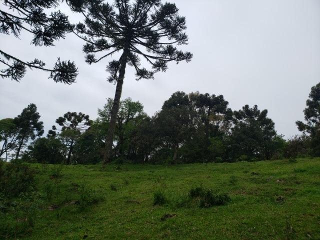 Lindo Sítio com Vista Para o Vale Rio Rufino/Urupema - Foto 8