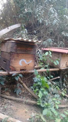 Caixas de abelha produzindo - Foto 3
