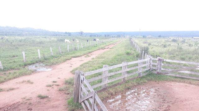 Fazenda 14.364 hectares em Alta Floresta-MT - Foto 2