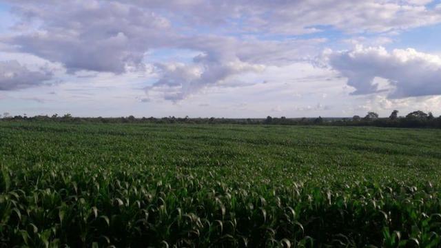 Vendo Fazenda Centro do Maranhão com excelente localização,terra teor argila 40/55% - Foto 16