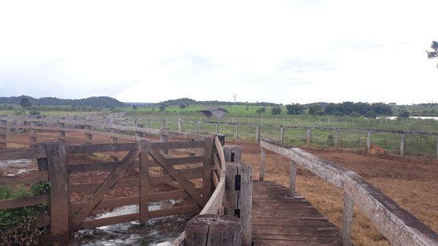 Fazenda 14.364 hectares em Alta Floresta-MT - Foto 8