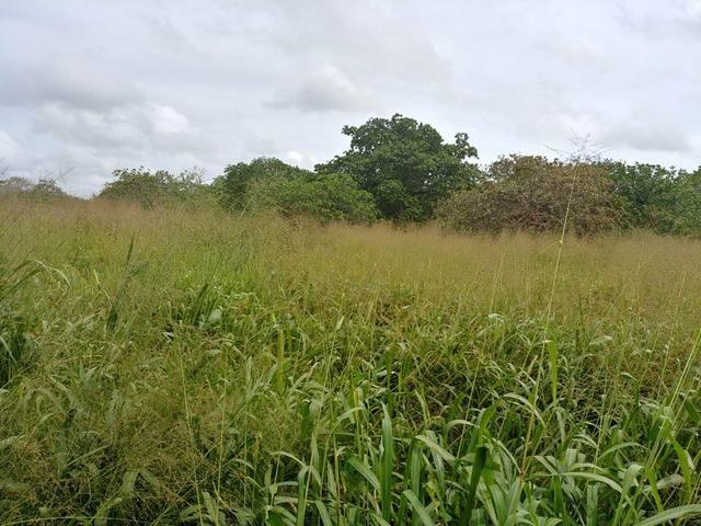 Granja com 8.8 hectares próximo da reta tabajara