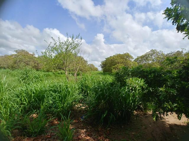 Granja com 8.8 hectares próximo da reta tabajara - Foto 12