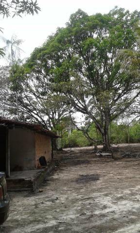 Sítio Santo Antônio do Tauá med.: 180 x 800 só R$ 150 mil - Foto 2