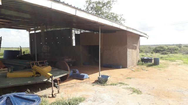 Fazenda em Iaçu-Ba - Foto 6