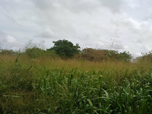 Granja com 8.8 hectares próximo da reta tabajara - Foto 2