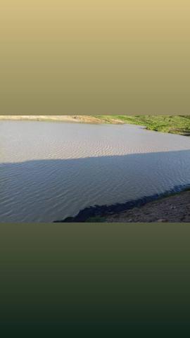Fazenda com 150 hectares em cachoeira do sapo na br 304 zap. * - Foto 5