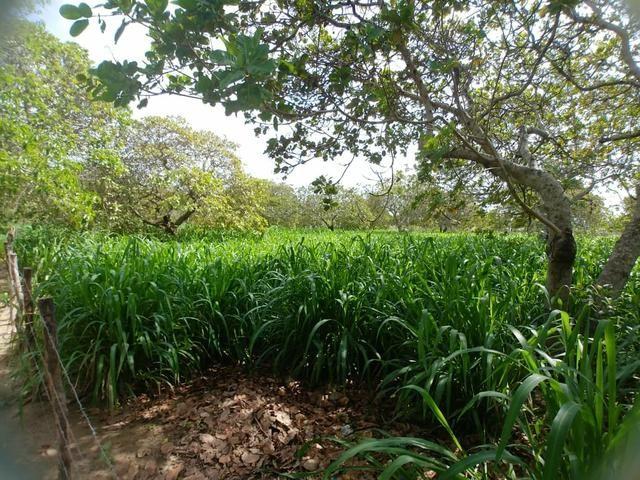 Granja com 8.8 hectares próximo da reta tabajara - Foto 4