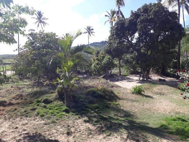 Ótima propriedade de 1.5 hectare, a 7 km da BR de Pombos-PE - Foto 4