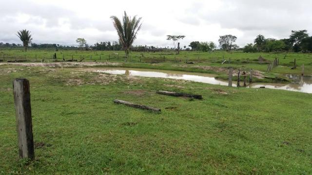 Fazenda - Porto Belo Linha 120 - 900 hectares - Foto 10