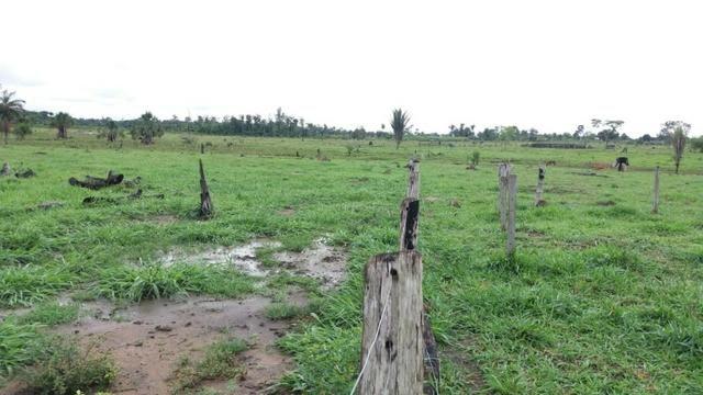 Fazenda - Porto Belo Linha 120 - 900 hectares - Foto 6