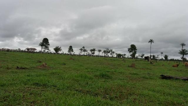 Fazenda - Porto Belo Linha 120 - 900 hectares - Foto 12