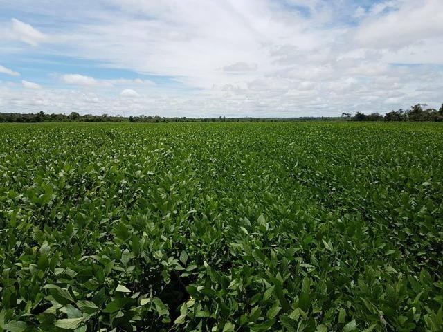 Vendo Fazenda Centro do Maranhão com excelente localização,terra teor argila 40/55% - Foto 13