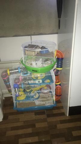 Vendo casal de hamster com gaiolas