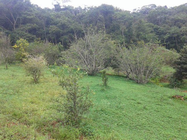 Sítio à venda com 3 dormitórios em Zona rural, Piranga cod:13135 - Foto 11