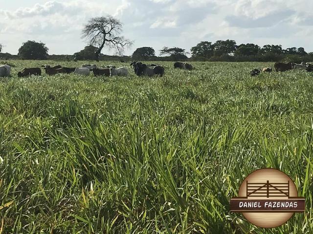 Fazenda com 480 hectares a 60 km de natal - Foto 19