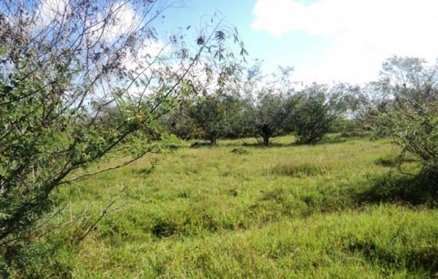 Terreno à venda em Parque eldorado, Eldorado do sul cod:LU261207 - Foto 2