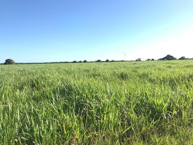 Fazenda com 480 hectares a 60 km de natal - Foto 6
