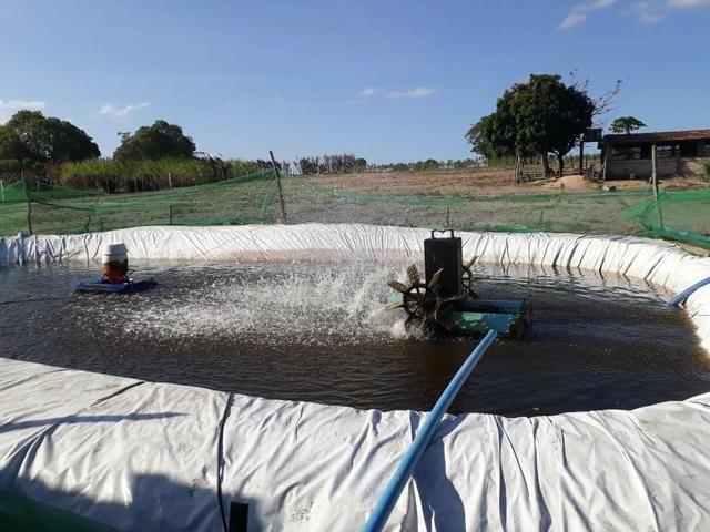 Granja estruturada em lagoa salgada 100% irrigada - Foto 2