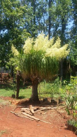 Plantas e jardin - Foto 2