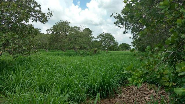 Granja com 8.8 hectares próximo da reta tabajara - Foto 10