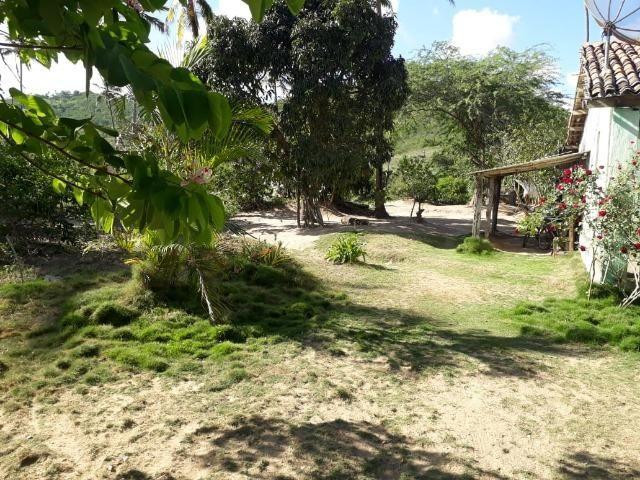 Ótima propriedade de 1.5 hectare, a 7 km da BR de Pombos-PE - Foto 9
