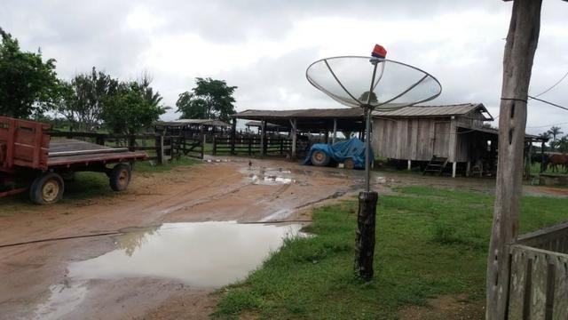 Fazenda - Porto Belo Linha 120 - 900 hectares - Foto 15