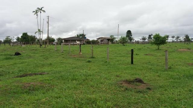 Fazenda - Porto Belo Linha 120 - 900 hectares - Foto 13