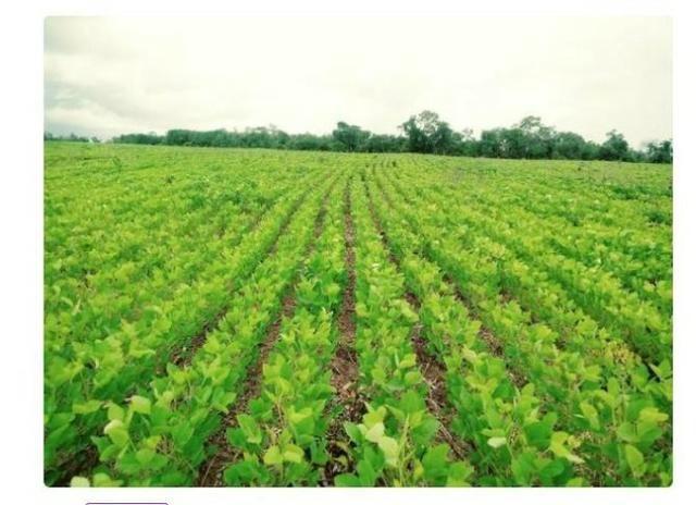 Vendo Fazenda Centro do Maranhão com excelente localização,terra teor argila 40/55% - Foto 10