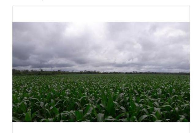 Vendo Fazenda Centro do Maranhão com excelente localização,terra teor argila 40/55% - Foto 2