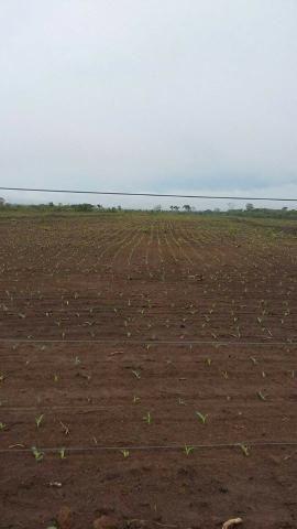 Vendo Fazenda Centro do Maranhão com excelente localização,terra teor argila 40/55% - Foto 11