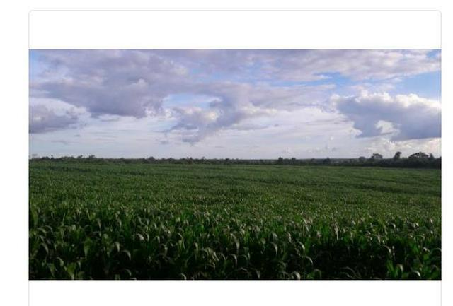 Vendo Fazenda Centro do Maranhão com excelente localização,terra teor argila 40/55%