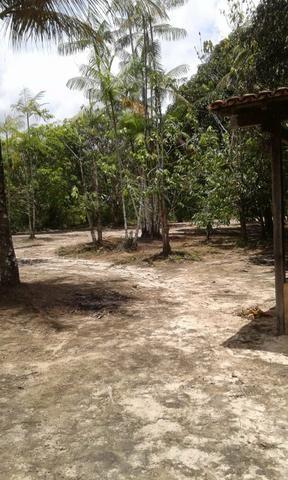 Sítio Santo Antônio do Tauá med.: 180 x 800 só R$ 150 mil - Foto 13