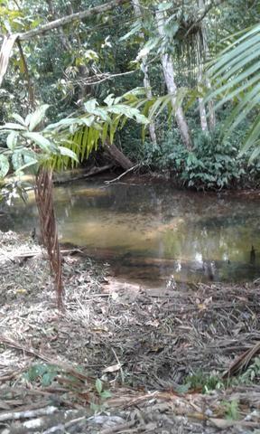 Sítio Santo Antônio do Tauá med.: 180 x 800 só R$ 150 mil - Foto 11