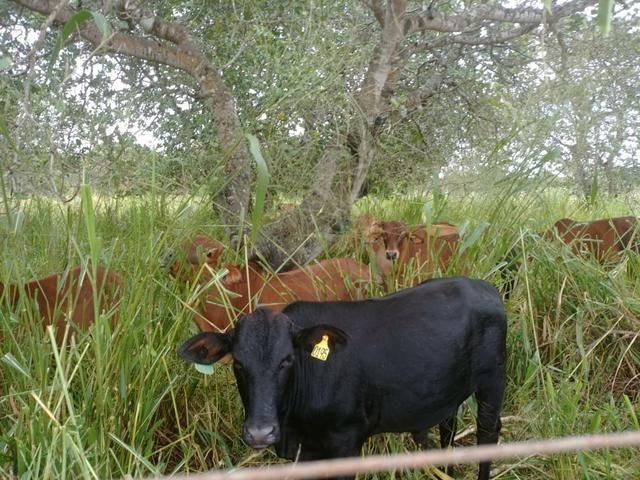 Granja com 8.8 hectares próximo da reta tabajara - Foto 6