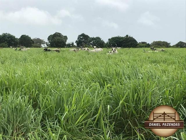 Fazenda com 480 hectares a 60 km de natal - Foto 2