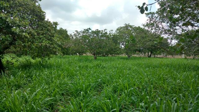 Granja com 8.8 hectares próximo da reta tabajara - Foto 13