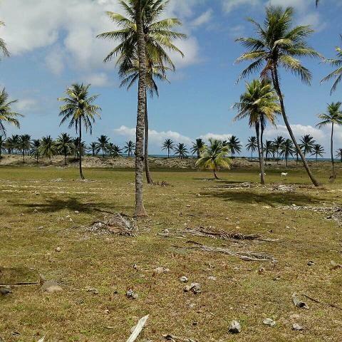 Terreno Beira Mar apenas R$8,00 m2 - Foto 3