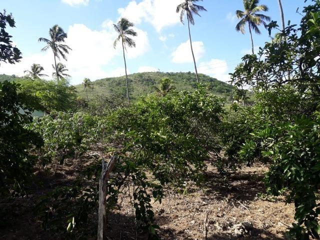 Ótima propriedade de 1.5 hectare, a 7 km da BR de Pombos-PE - Foto 5
