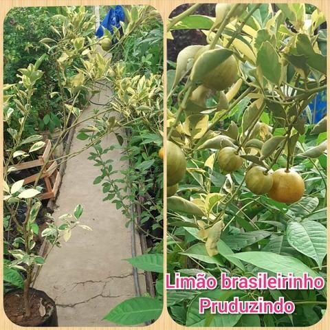 Plantas frut