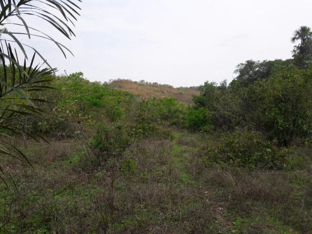 Fazenda Rio Preto - Centenário/TO, c/ 393,0 hectares = 82,1 Alqueires
