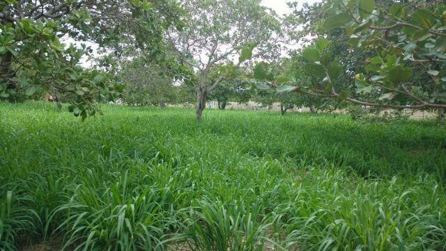 Granja com 8.8 hectares próximo da reta tabajara - Foto 16